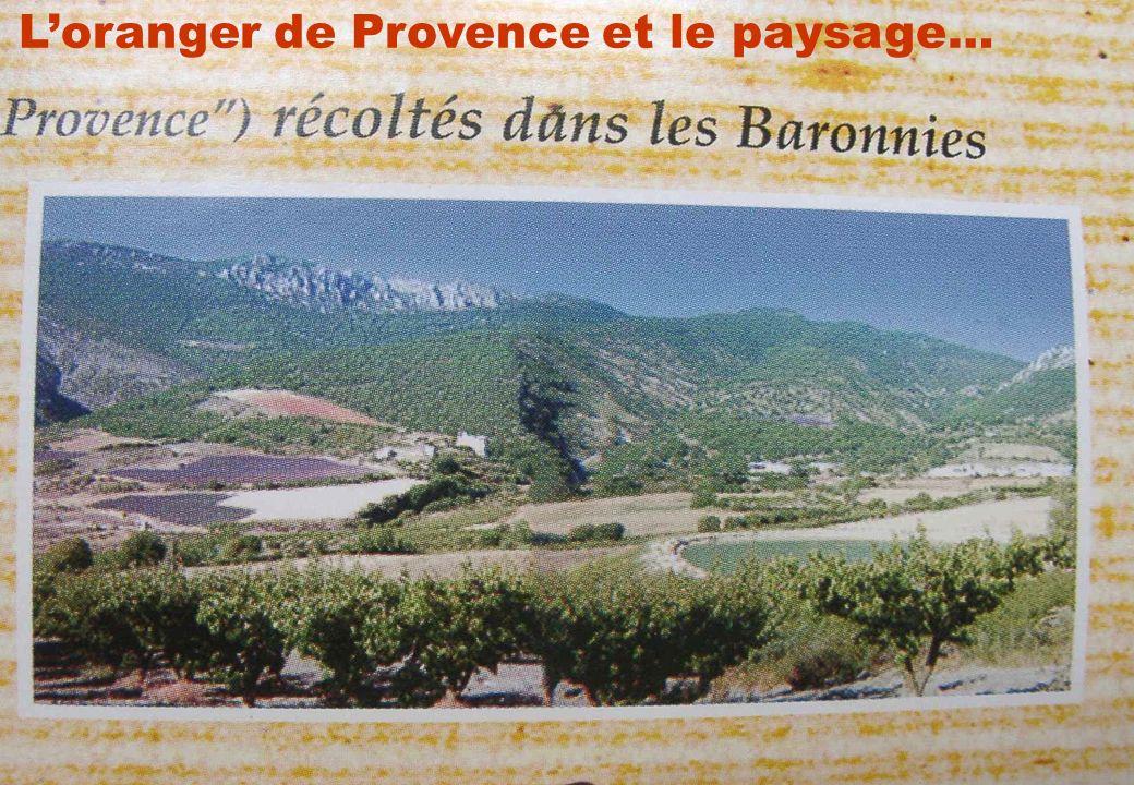 Séminaire INRA-SADAPT, 07 octobre 200919 Loranger de Provence et le paysage…