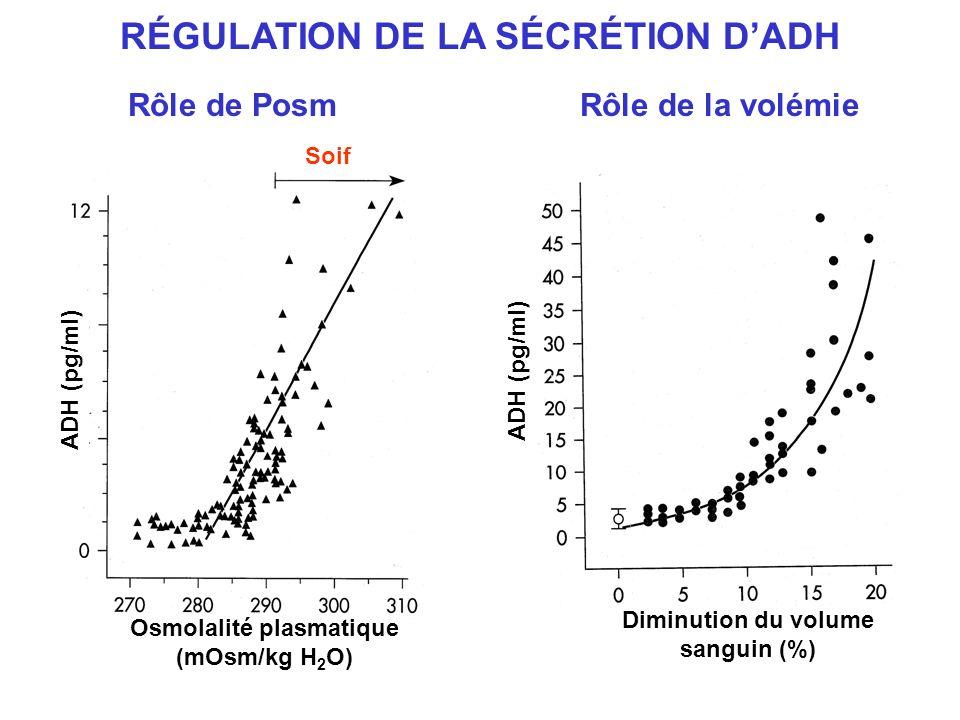 RÉGULATION DE LA SÉCRÉTION DADH ADH (pg/ml) Osmolalité plasmatique (mOsm/kg H 2 O) Soif Diminution du volume sanguin (%) Rôle de PosmRôle de la volémi