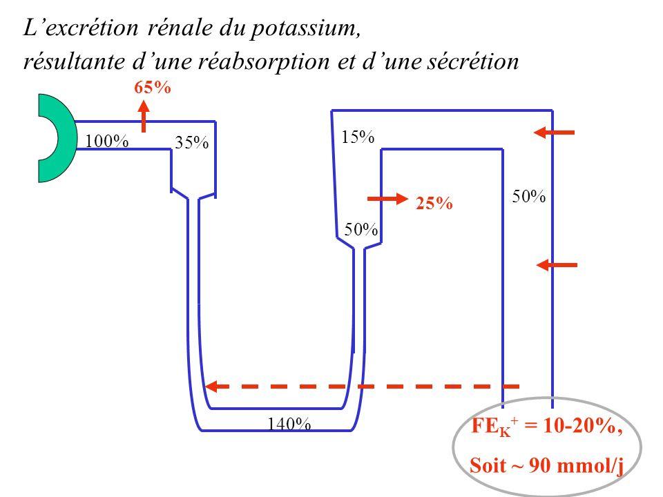 100% 35% 15% 50% 65% 25% 50% 140% FE K + = 10-20%, Soit ~ 90 mmol/j Lexcrétion rénale du potassium, résultante dune réabsorption et dune sécrétion