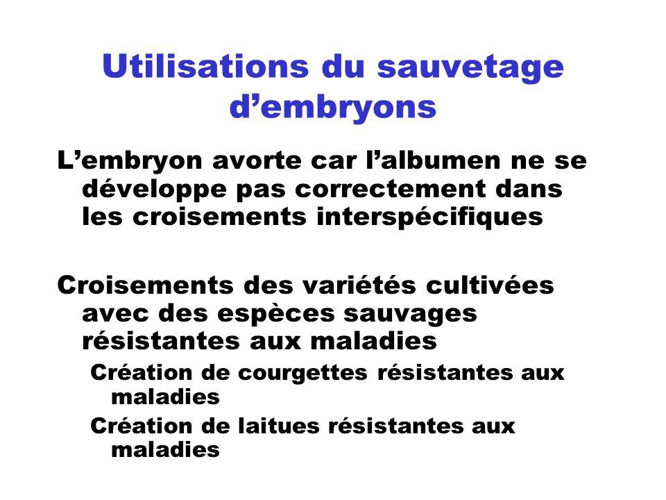 Utilisations du sauvetage dembryons Lembryon avorte car lalbumen ne se développe pas correctement dans les croisements interspécifiques Croisements de