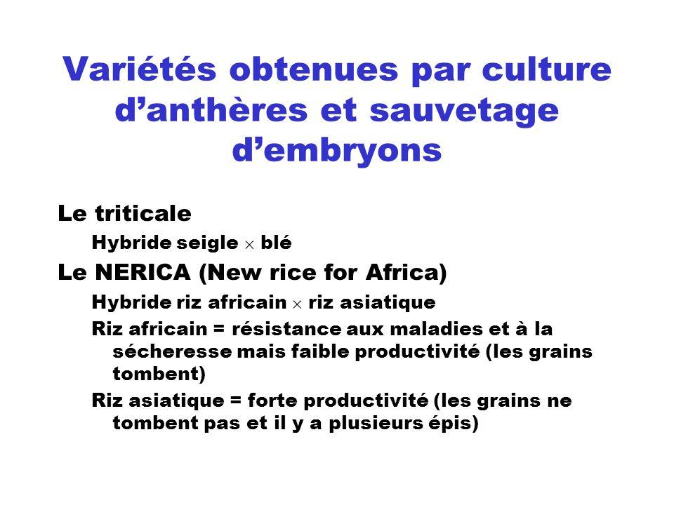 Variétés obtenues par culture danthères et sauvetage dembryons Le triticale Hybride seigle blé Le NERICA (New rice for Africa) Hybride riz africain ri
