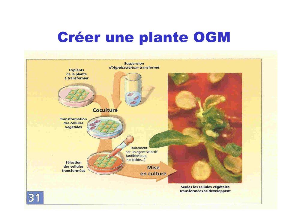 Créer une plante OGM
