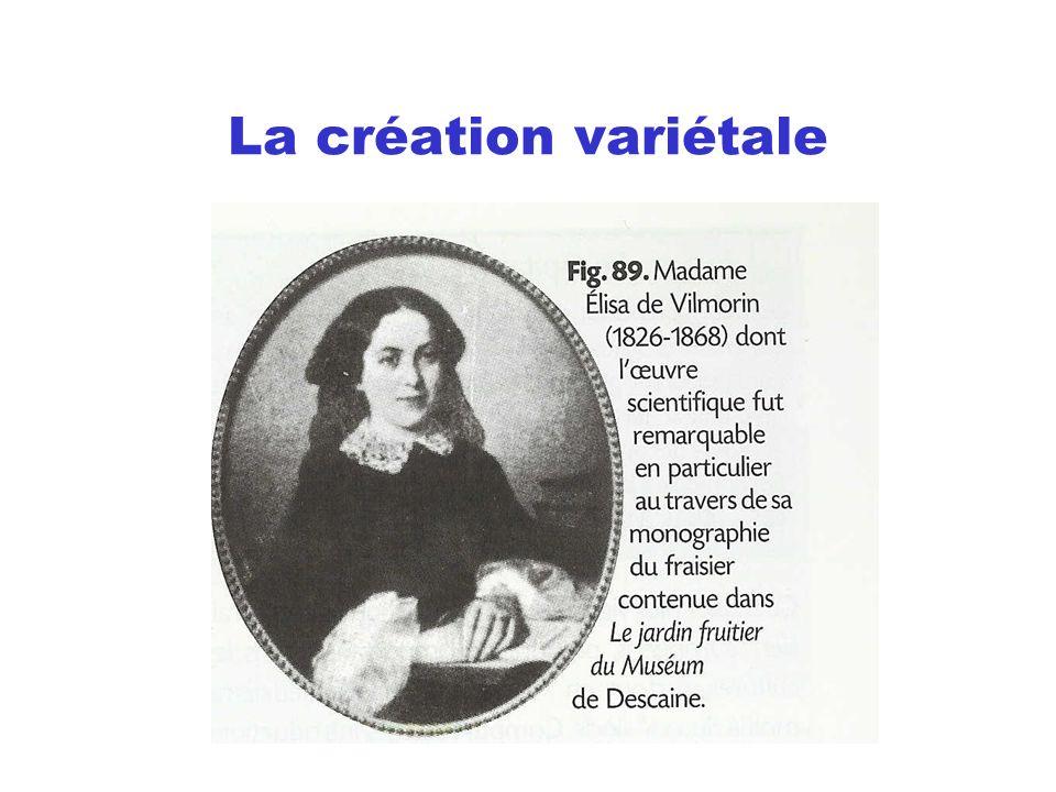La création variétale