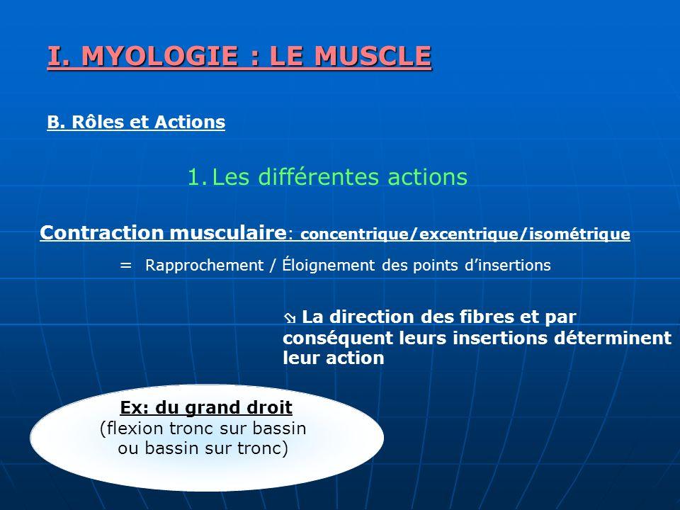 I. MYOLOGIE : LE MUSCLE B. Rôles et Actions 1.Les différentes actions La direction des fibres et par conséquent leurs insertions déterminent leur acti