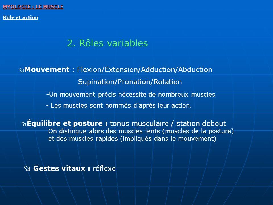 2. Rôles variables MYOLOGIE : LE MUSCLE Rôle et action Mouvement : Flexion/Extension/Adduction/Abduction Supination/Pronation/Rotation - Un mouvement