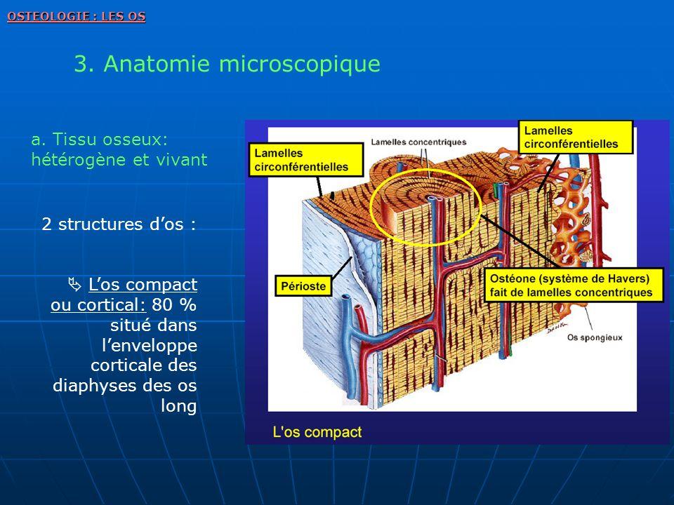 2 structures dos : Los compact ou cortical: 80 % situé dans lenveloppe corticale des diaphyses des os long 3. Anatomie microscopique OSTEOLOGIE : LES