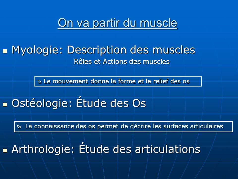 On va partir du muscle Myologie: Description des muscles Myologie: Description des muscles Rôles et Actions des muscles Ostéologie: Étude des Os Ostéo