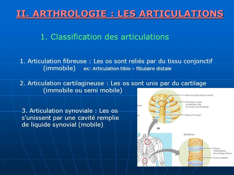 II. ARTHROLOGIE : LES ARTICULATIONS 1. Classification des articulations 1. Articulation fibreuse : Les os sont reliés par du tissu conjonctif (immobil
