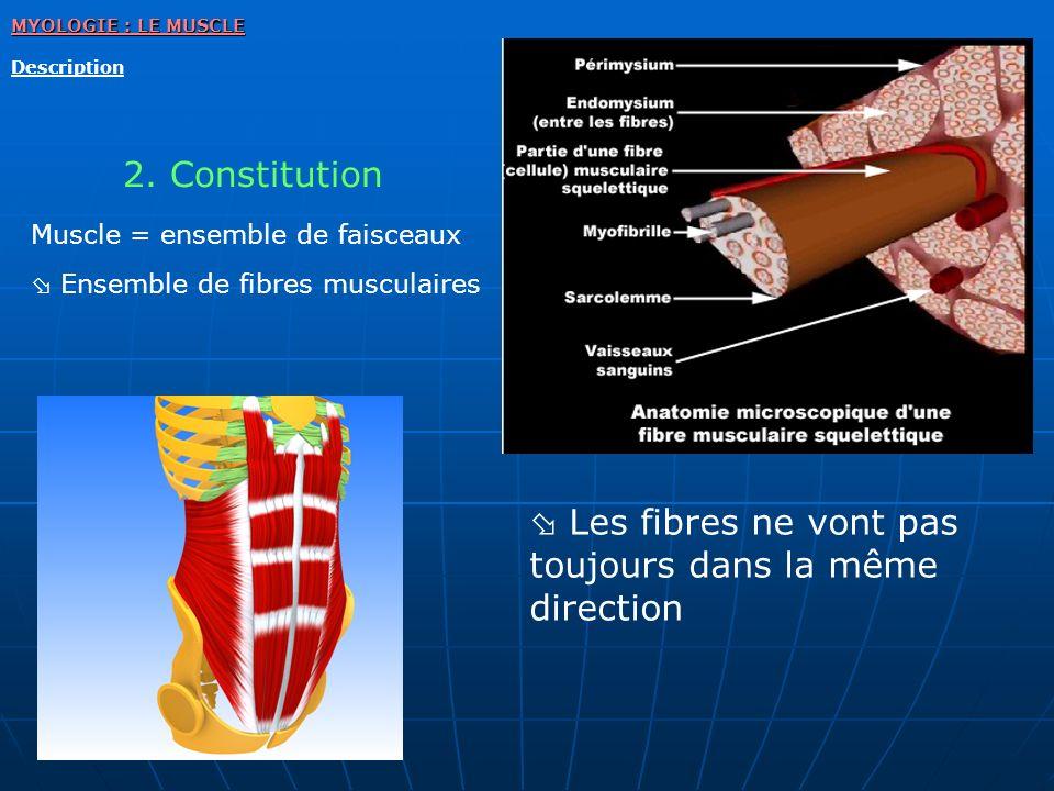 MYOLOGIE : LE MUSCLE Description Les fibres ne vont pas toujours dans la même direction 2. Constitution Muscle = ensemble de faisceaux Ensemble de fib