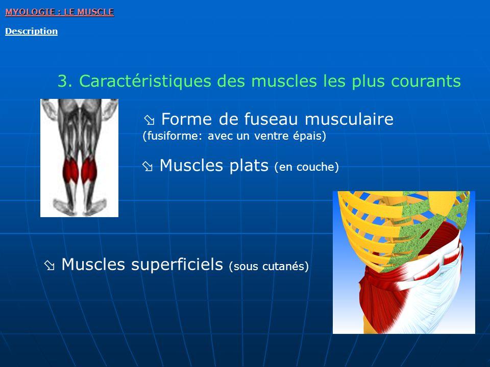 MYOLOGIE : LE MUSCLE Description 3. Caractéristiques des muscles les plus courants Muscles plats (en couche) Forme de fuseau musculaire (fusiforme: av