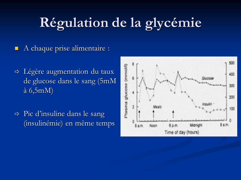 Régulation de la glycémie A chaque prise alimentaire : A chaque prise alimentaire : Légère augmentation du taux de glucose dans le sang (5mM à 6,5mM)
