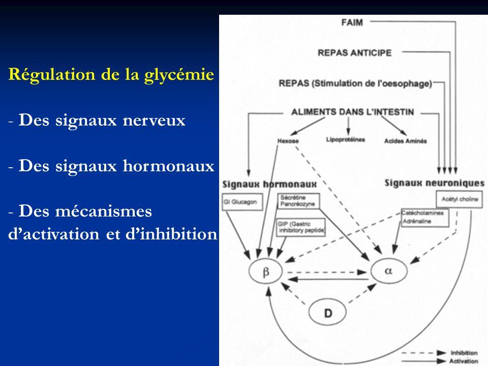 Régulation de la glycémie - Des signaux nerveux - Des signaux hormonaux - Des mécanismes dactivation et dinhibition