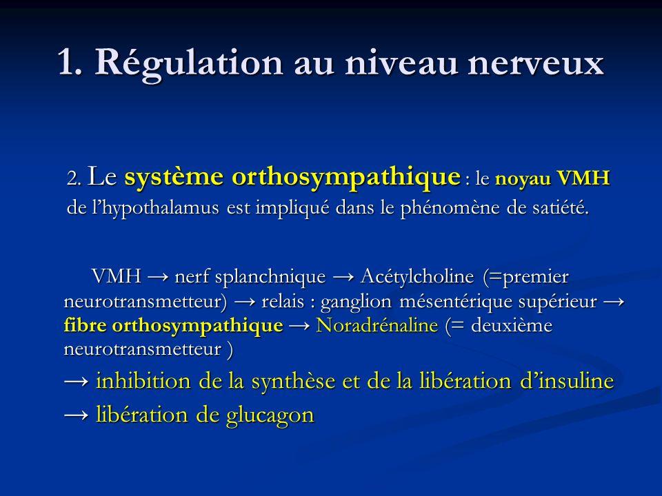 1. Régulation au niveau nerveux VMH nerf splanchnique Acétylcholine (=premier neurotransmetteur) relais : ganglion mésentérique supérieur fibre orthos