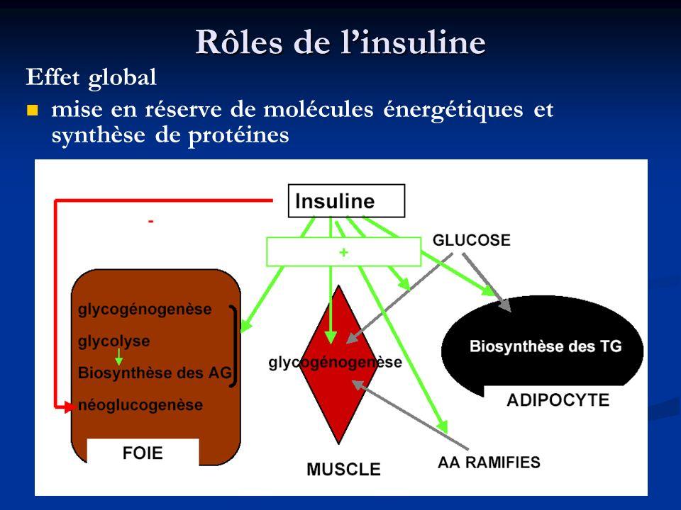 Rôles de linsuline Effet global mise en réserve de molécules énergétiques et synthèse de protéines