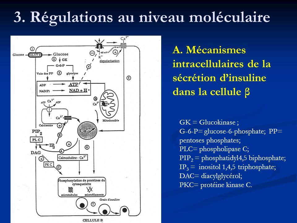 3. Régulations au niveau moléculaire A. Mécanismes intracellulaires de la sécrétion dinsuline dans la cellule β GK = Glucokinase ; G-6-P= glucose-6-ph