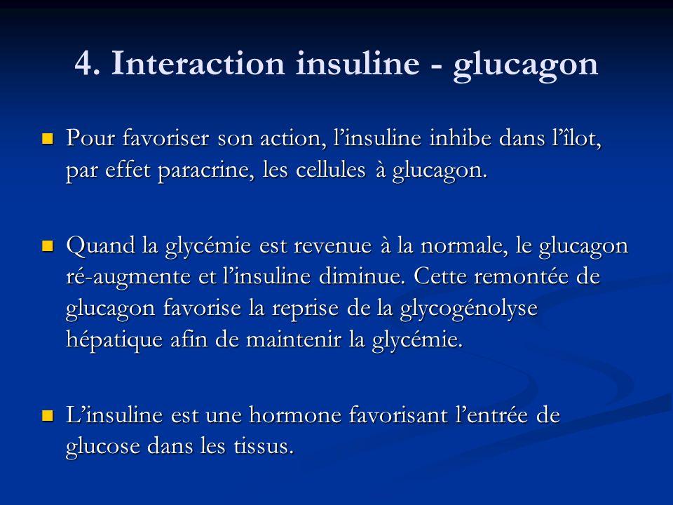 4. Interaction insuline - glucagon Pour favoriser son action, linsuline inhibe dans lîlot, par effet paracrine, les cellules à glucagon. Pour favorise