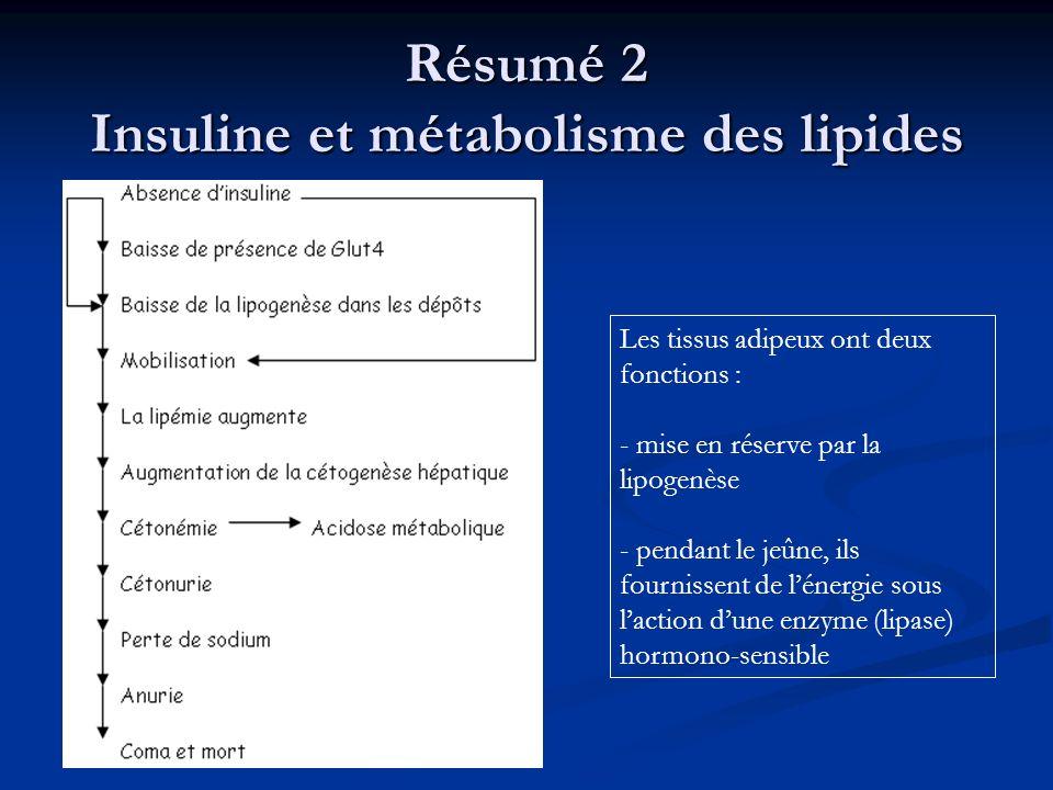 Résumé 2 Insuline et métabolisme des lipides Les tissus adipeux ont deux fonctions : - mise en réserve par la lipogenèse - pendant le jeûne, ils fourn