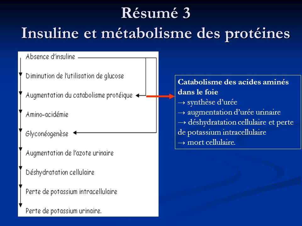 Résumé 3 Insuline et métabolisme des protéines Catabolisme des acides aminés dans le foie synthèse durée augmentation durée urinaire déshydratation ce