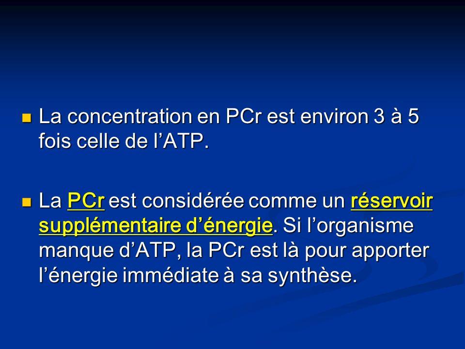 La concentration en PCr est environ 3 à 5 fois celle de lATP. La concentration en PCr est environ 3 à 5 fois celle de lATP. La PCr est considérée comm