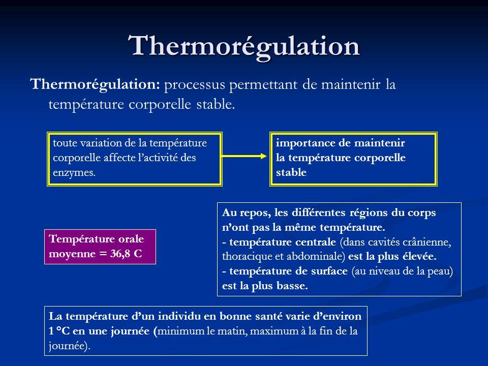 Thermorégulation Thermorégulation: processus permettant de maintenir la température corporelle stable. Température orale moyenne = 36,8 C importance d