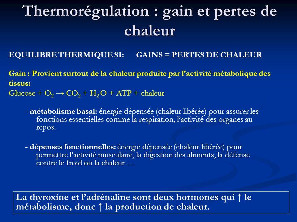 Thermorégulation : gain et pertes de chaleur - métabolisme basal: énergie dépensée (chaleur libérée) pour assurer les fonctions essentielles comme la