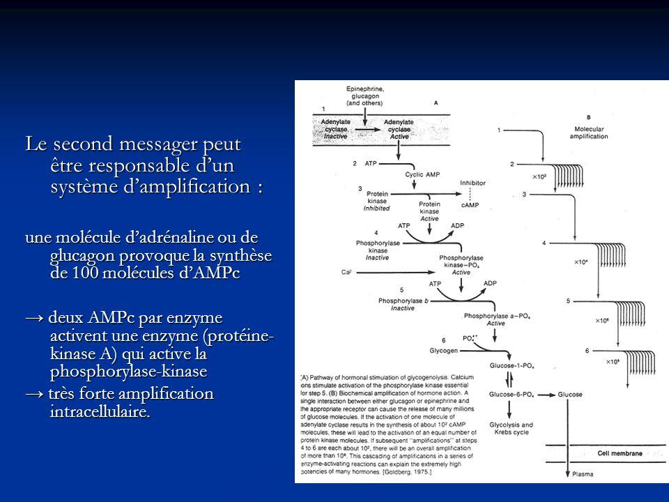 Le second messager peut être responsable dun système damplification : une molécule dadrénaline ou de glucagon provoque la synthèse de 100 molécules dA