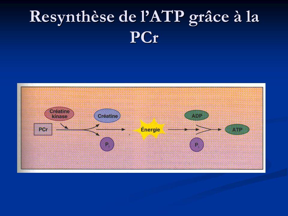 Resynthèse de lATP grâce à la PCr