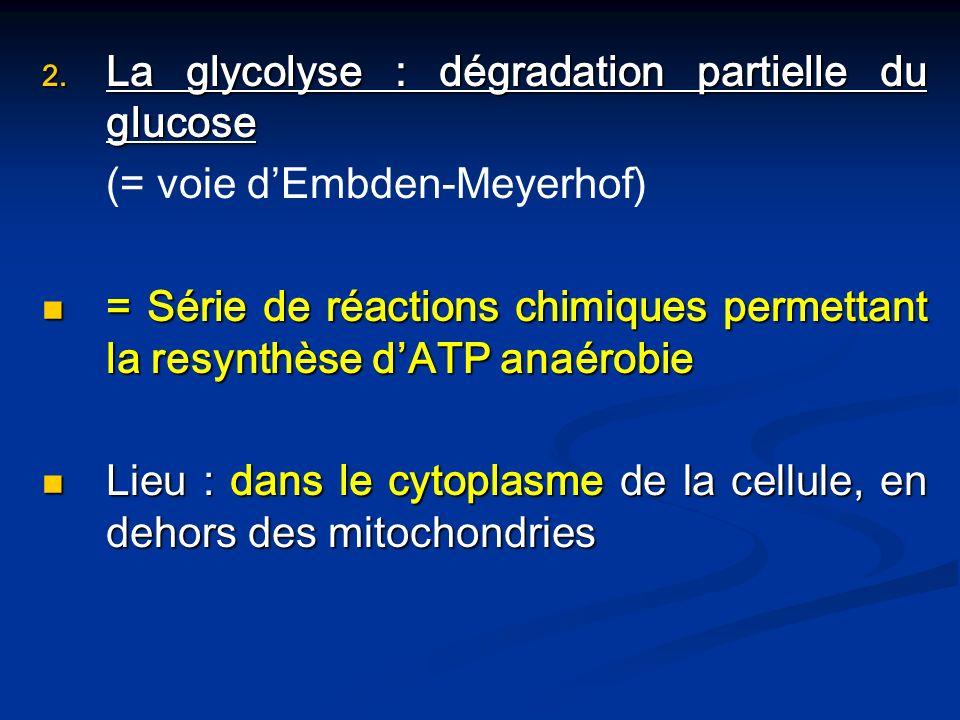 2. La glycolyse : dégradation partielle du glucose (= voie dEmbden-Meyerhof) = Série de réactions chimiques permettant la resynthèse dATP anaérobie =