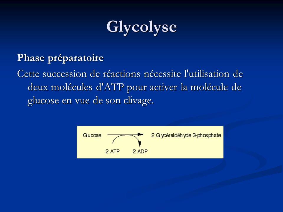 Glycolyse Phase préparatoire Cette succession de réactions nécessite l'utilisation de deux molécules d'ATP pour activer la molécule de glucose en vue