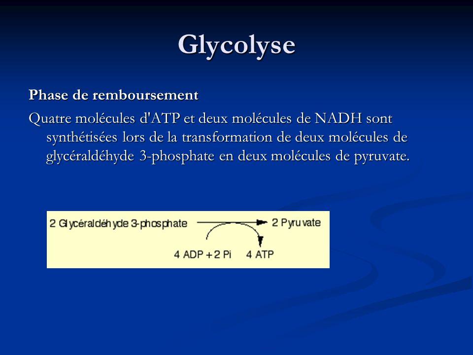 Glycolyse Phase de remboursement Quatre molécules d'ATP et deux molécules de NADH sont synthétisées lors de la transformation de deux molécules de gly