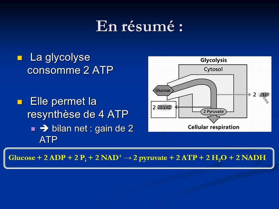 En résumé : La glycolyse consomme 2 ATP La glycolyse consomme 2 ATP Elle permet la resynthèse de 4 ATP Elle permet la resynthèse de 4 ATP bilan net :