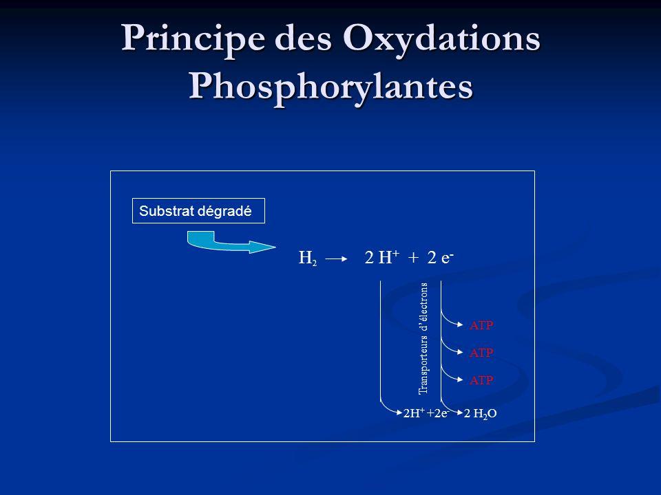 Principe des Oxydations Phosphorylantes Substrat dégradé H2H2 2 H + + 2 e - 2 H 2 O ATP Transporteurs délectrons