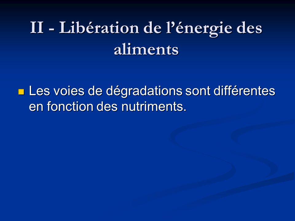 II - Libération de lénergie des aliments Les voies de dégradations sont différentes en fonction des nutriments. Les voies de dégradations sont différe