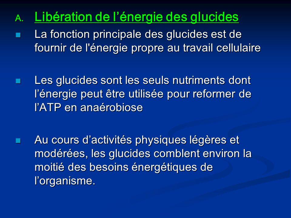 A. Libération de lénergie des glucides La fonction principale des glucides est de fournir de l'énergie propre au travail cellulaire La fonction princi