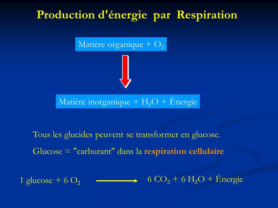 1 glucose + 6 O 2 6 CO 2 + 6 H 2 O + Énergie Production d'énergie par Respiration Matière organique + O 2 Matière inorganique + H 2 O + Énergie Tous l
