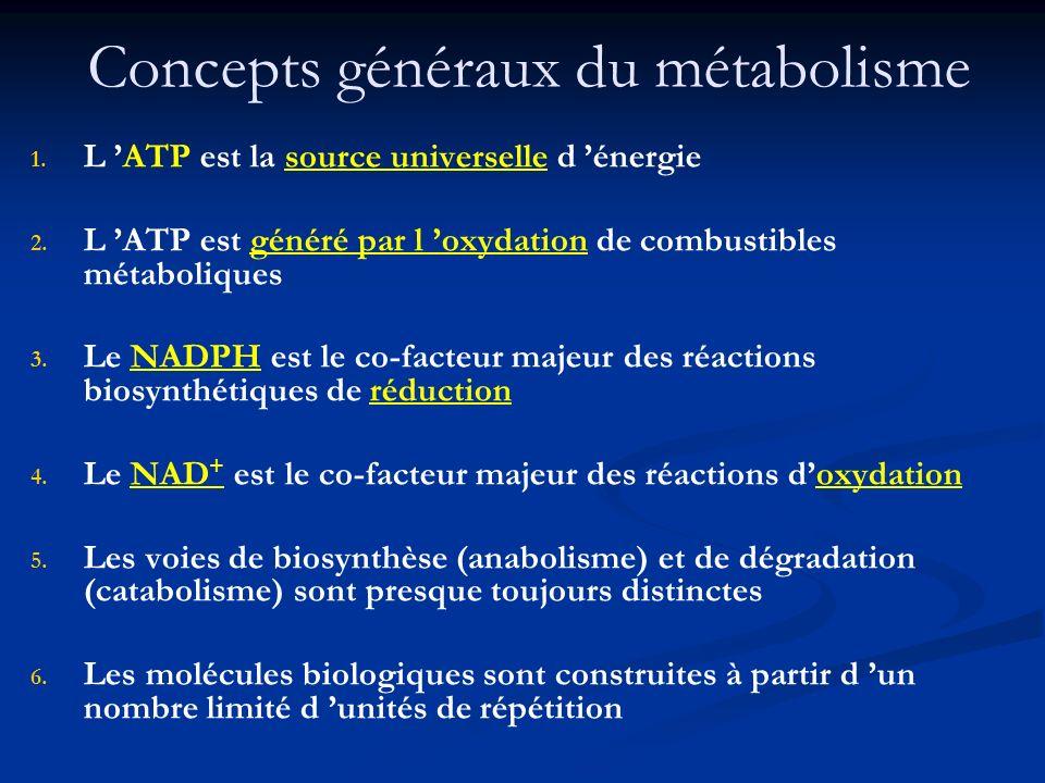 Concepts généraux du métabolisme 1. 1. L ATP est la source universelle d énergie 2. 2. L ATP est généré par l oxydation de combustibles métaboliques 3