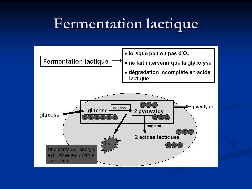 Fermentation lactique