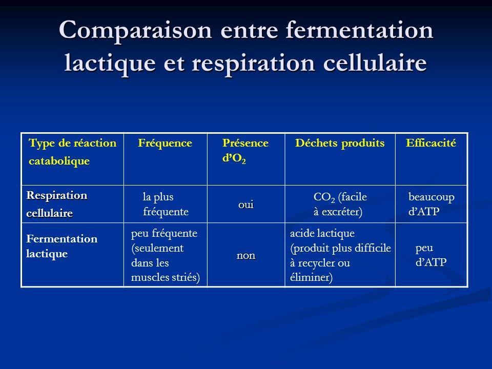 Comparaison entre fermentation lactique et respiration cellulaire Type de réaction catabolique FréquencePrésence dO 2 Déchets produitsEfficacité Respi