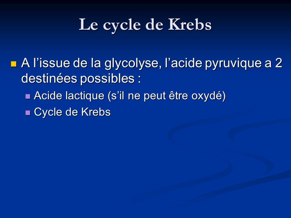 Le cycle de Krebs A lissue de la glycolyse, lacide pyruvique a 2 destinées possibles : A lissue de la glycolyse, lacide pyruvique a 2 destinées possib