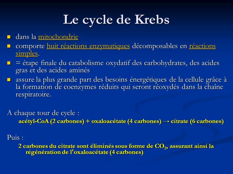 Le cycle de Krebs dans la mitochondrie dans la mitochondriemitochondrie comporte huit réactions enzymatiques décomposables en réactions simples. compo