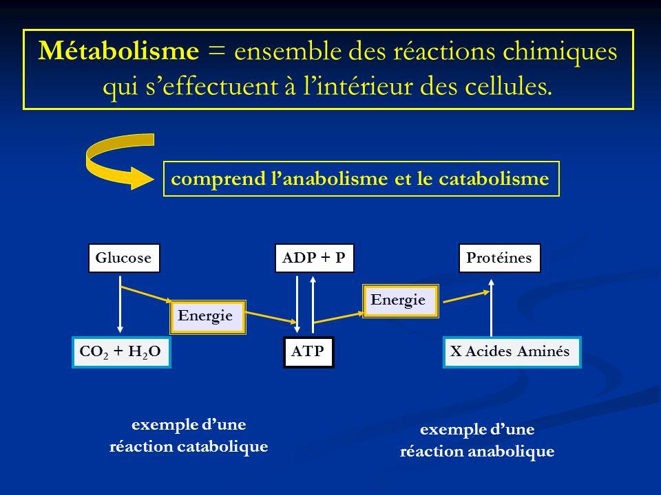 Métabolisme = ensemble des réactions chimiques qui seffectuent à lintérieur des cellules. comprend lanabolisme et le catabolisme Glucose Energie CO 2