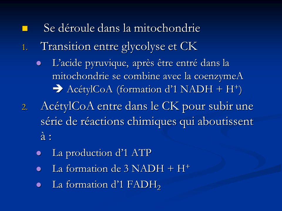 Se déroule dans la mitochondrie Se déroule dans la mitochondrie 1. Transition entre glycolyse et CK Lacide pyruvique, après être entré dans la mitocho