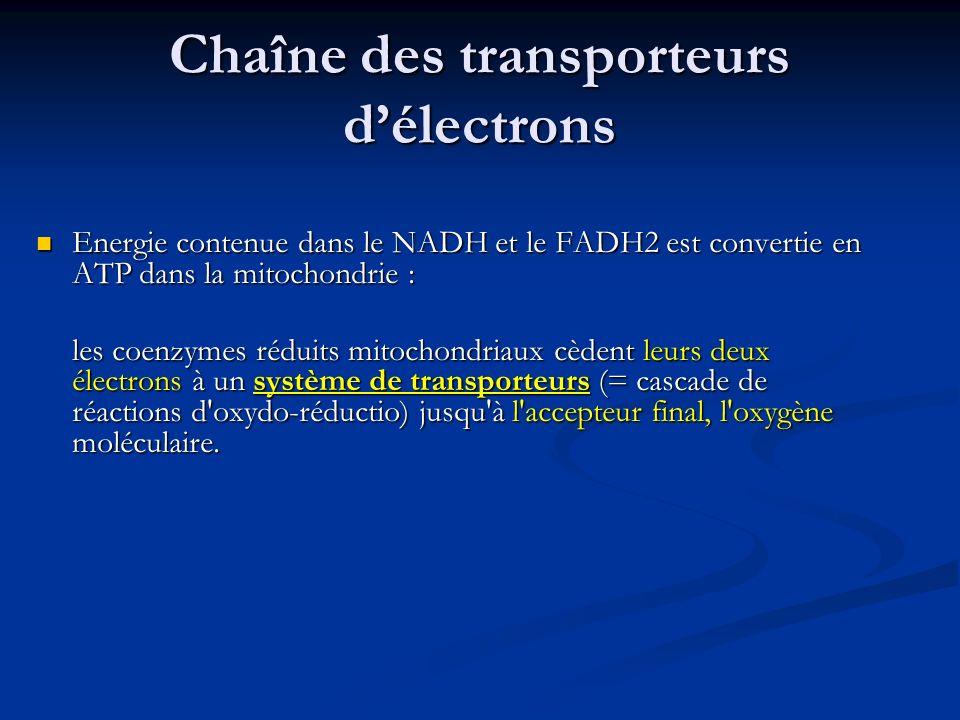 Chaîne des transporteurs délectrons Energie contenue dans le NADH et le FADH2 est convertie en ATP dans la mitochondrie : Energie contenue dans le NAD