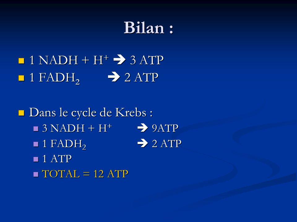 Bilan : 1 NADH + H + 3 ATP 1 NADH + H + 3 ATP 1 FADH 2 2 ATP 1 FADH 2 2 ATP Dans le cycle de Krebs : Dans le cycle de Krebs : 3 NADH + H + 9ATP 3 NADH