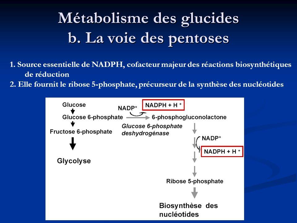 Métabolisme des glucides b. La voie des pentoses 1. Source essentielle de NADPH, cofacteur majeur des réactions biosynthétiques de réduction 2. Elle f