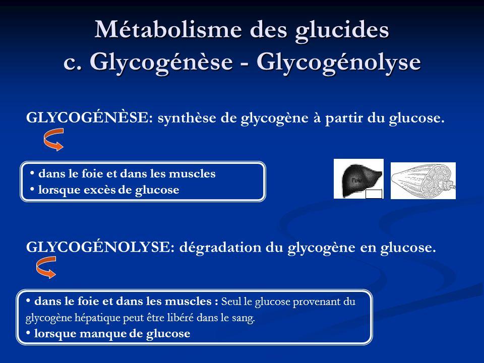 Métabolisme des glucides c. Glycogénèse - Glycogénolyse dans le foie et dans les muscles lorsque excès de glucose GLYCOGÉNÈSE: synthèse de glycogène à