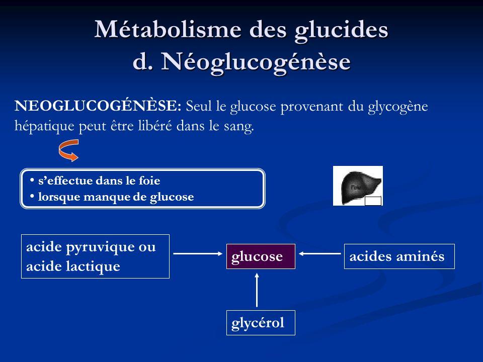 Métabolisme des glucides d. Néoglucogénèse seffectue dans le foie lorsque manque de glucose NEOGLUCOGÉNÈSE: Seul le glucose provenant du glycogène hép