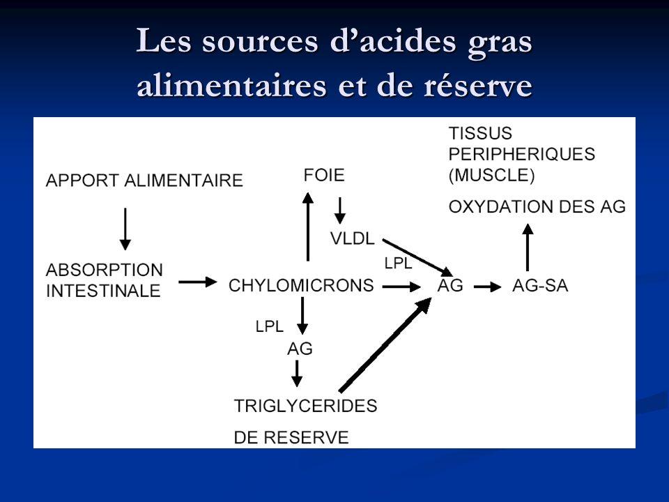Les sources dacides gras alimentaires et de réserve