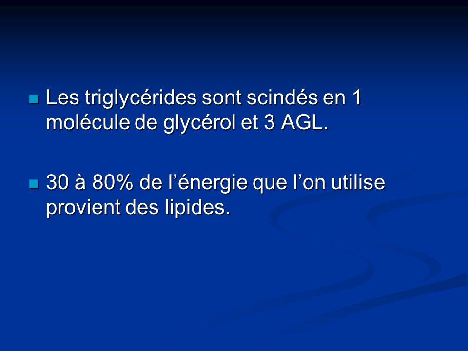 Les triglycérides sont scindés en 1 molécule de glycérol et 3 AGL. Les triglycérides sont scindés en 1 molécule de glycérol et 3 AGL. 30 à 80% de léne