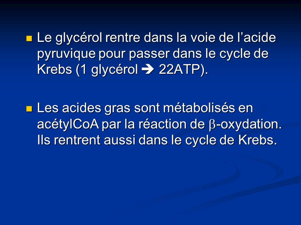 Le glycérol rentre dans la voie de lacide pyruvique pour passer dans le cycle de Krebs (1 glycérol 22ATP). Le glycérol rentre dans la voie de lacide p